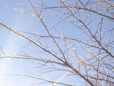 キラキラ光る小枝