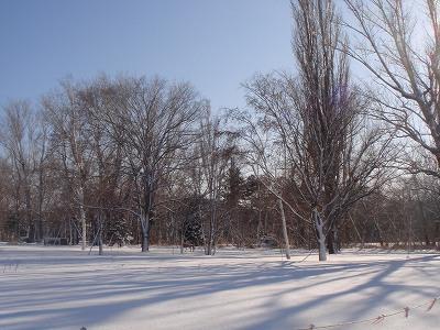 北大の雪原