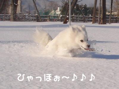 エル除雪?