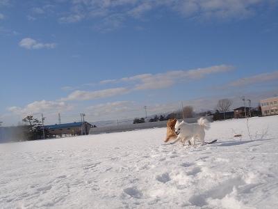 広い雪原にて