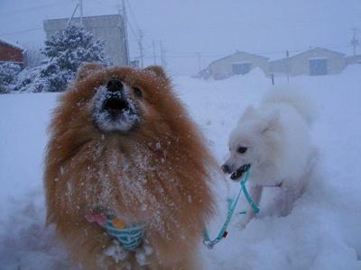 雪は大好き♪