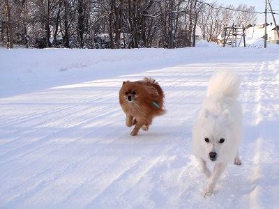 ケンエル樹氷の中の散歩