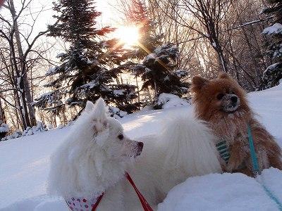 青空公園は、雪が深すぎ!