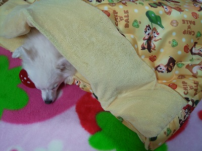 寝袋完成♪