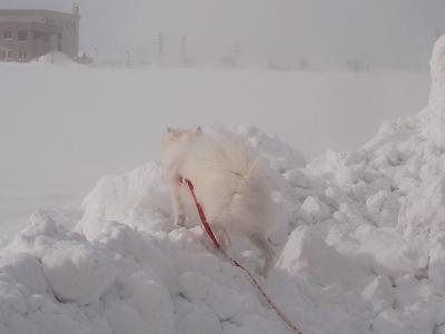 地吹雪だってぇ~。