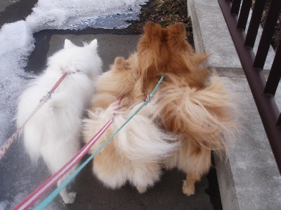 並んでお散歩!
