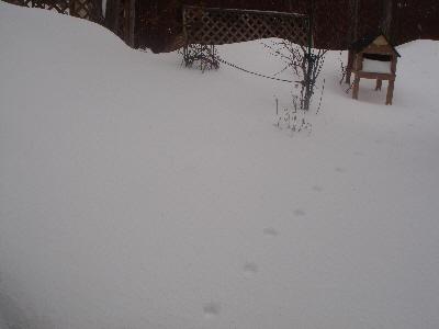 ニャンコの足跡。