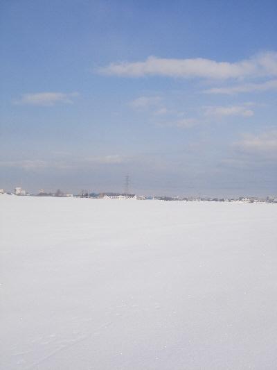 玉ねぎ畑の雪原!