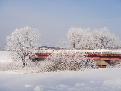 赤い橋と樹氷