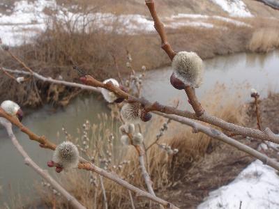 春の小川?