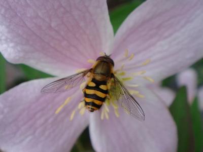 モンタナ&蜂?