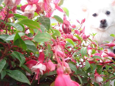 母が好きな花