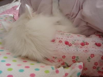 枕とられた・・・