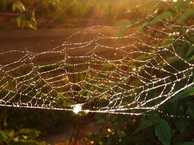 クモの巣です