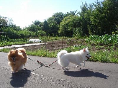 ワクワク散歩♪