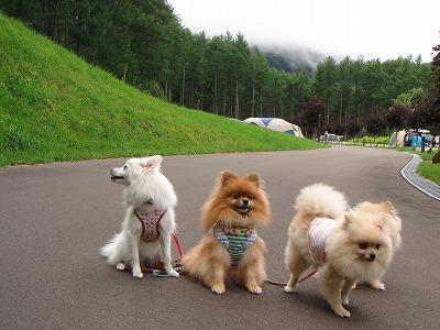 ちょっと、お散歩してこようよ♪