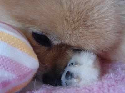 寝やすくて・・・