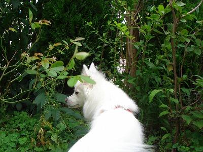 庭はジャングル