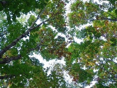 見上げたら秋色