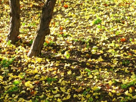 「あの森」の落ち葉
