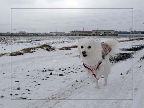 ぶっとび会場・・・雪不足。