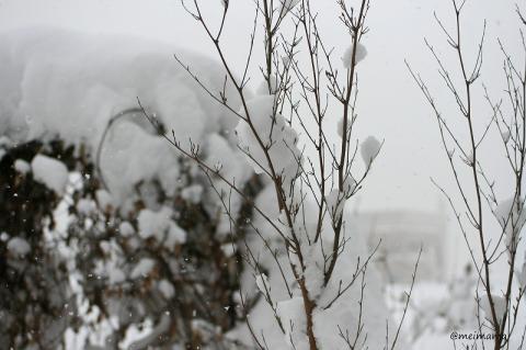 庭の除雪?してないよ。