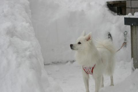 雪・・・♪