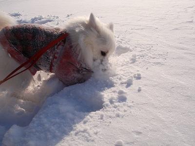 エル、除雪中