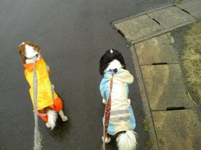 雨の日散歩2