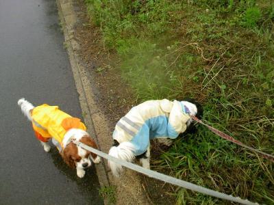 雨の日散歩1