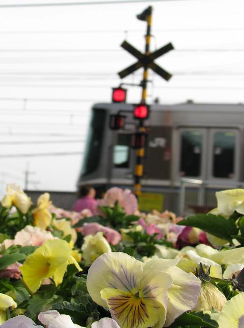 パンジーと電車