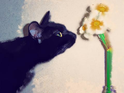 葉璃伊 花を愛でる