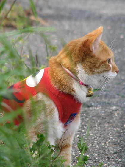 服を着たネコ2