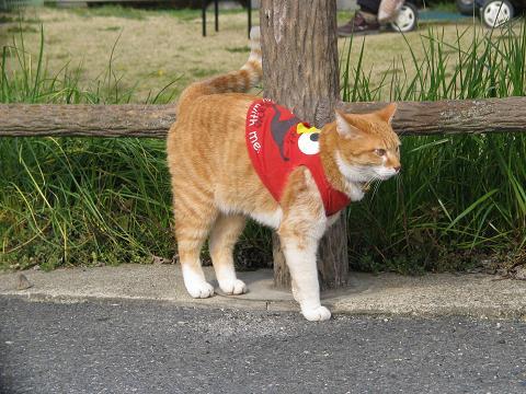 服を着たネコ1