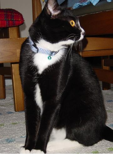 慈2006・05