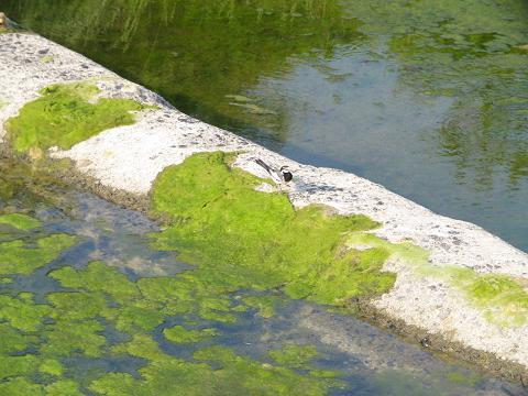 川が池に?