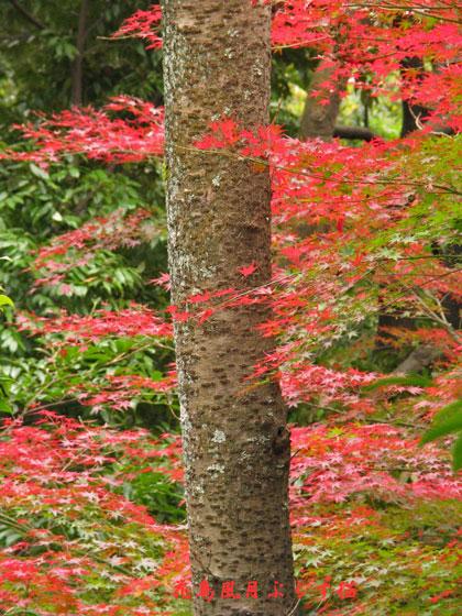 カラフルな紅葉.jpg