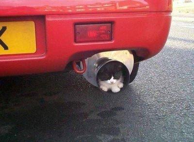 cat_15_m.jpg