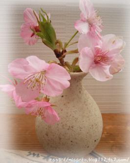 ペンションの桜