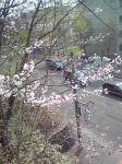林道から桜