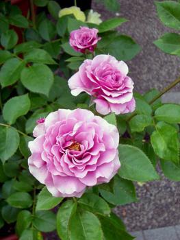 CIMG2219.2007.5.23.jpg