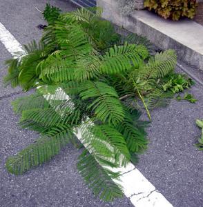 CIMG3704.2007.8.4.jpg