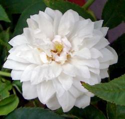 CIMG4212-20070910.jpg
