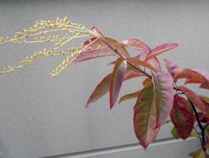 CIMG5220.2007.10.27-2.jpg