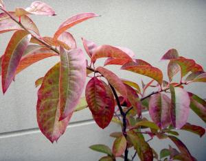 CIMG5221.2007.10.27_20071129160715.jpg