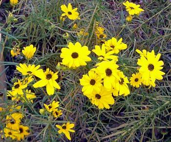 CIMG5485.2007.11.8-2.jpg