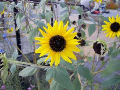 CIMG5492.2007.11.8.jpg
