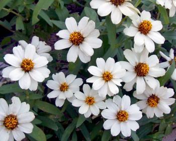 CIMG5499.2007.11.8.jpg