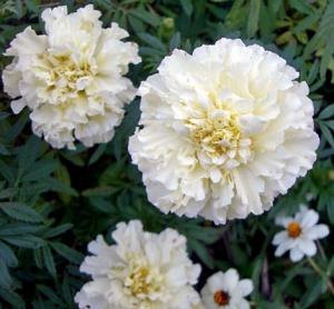 CIMG5515.2007.11.8-2.jpg