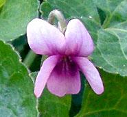 CIMG5591.2007.11.14-2.jpg